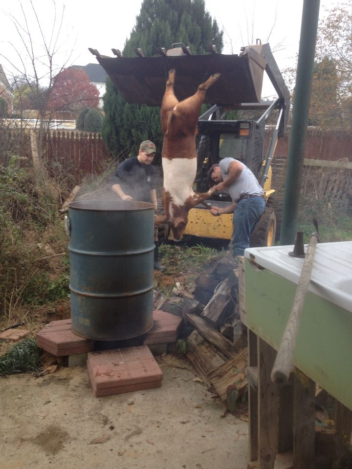 Hog slaughter on the farm. We built a rocket stove to heat our scalding tank.
