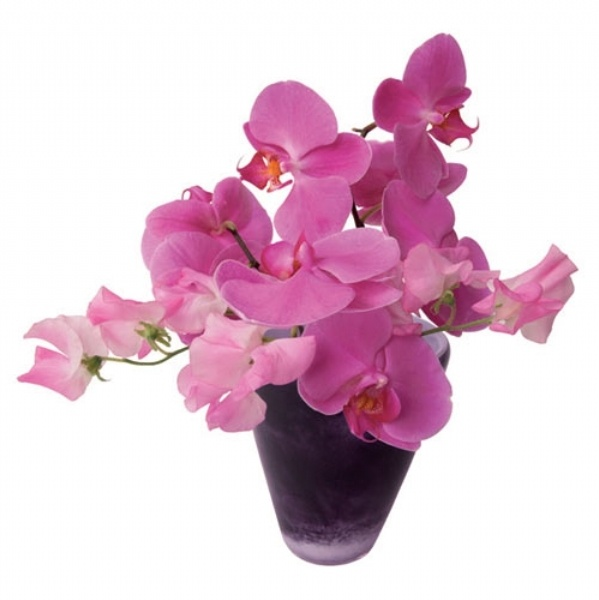 FLAT FLOWER ORCHID POST CARD