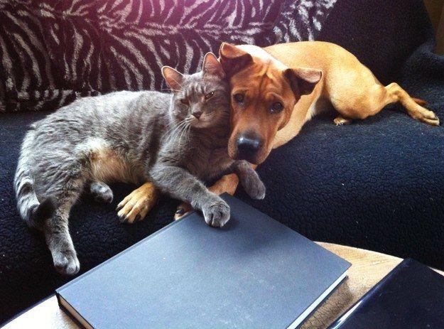 Y este dúo es la pareja literaria más linda de todo Misisipi...