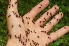 Permetezd körbe a házad ezzel a házi spary-el, és örökre elmenekülnek onnan a hangyák. A kertben is bevetheted!