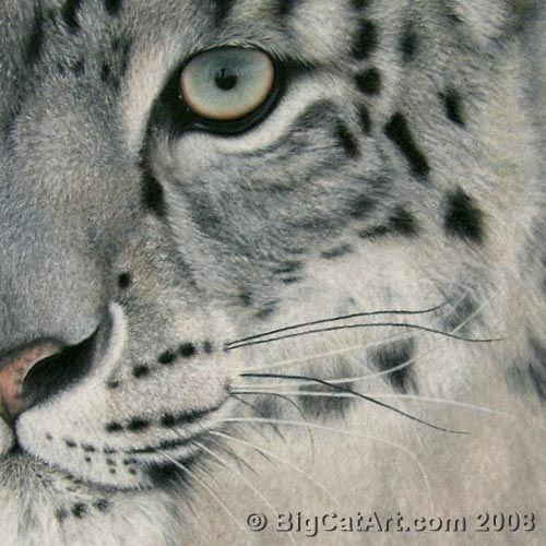 Big Cat Art by Christina Langman - yes, this IS a Colored Pencil Tutorial!