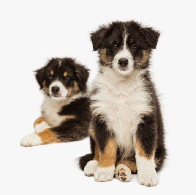 Najdroższe #rasy psów w Polsce