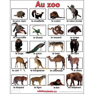 les animaux du zoo - vocabulaire