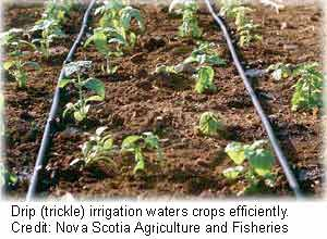 drip irrigation - Google Search