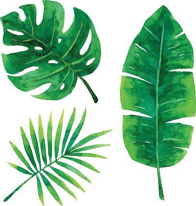 Vector illustration of tropical plants leaf. (Diy Art Watercolor)