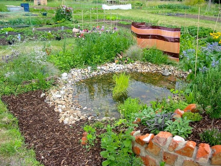 Heart and Soil - Stock Wood Farm: A Permaculture Allotment - From weeds to rich food growing habitat in 4 months!