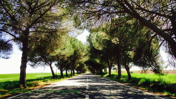 Portugal, near Beja