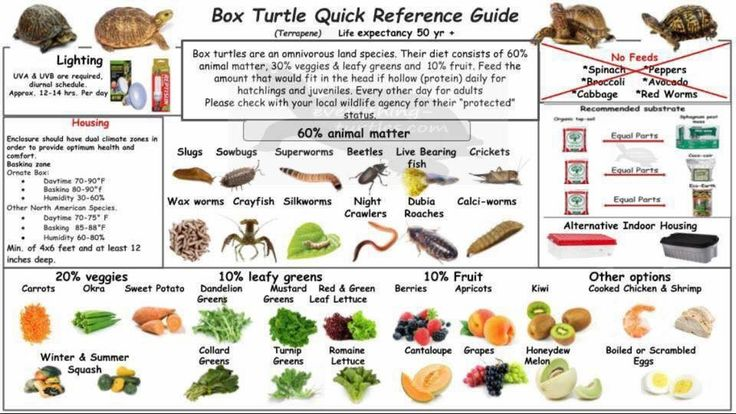 Box turtle diet and health basics charts.
