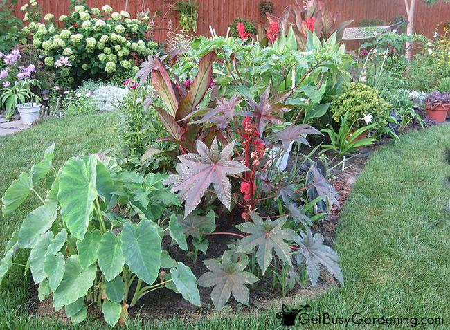 Castor Bean Plant In Tropical Garden