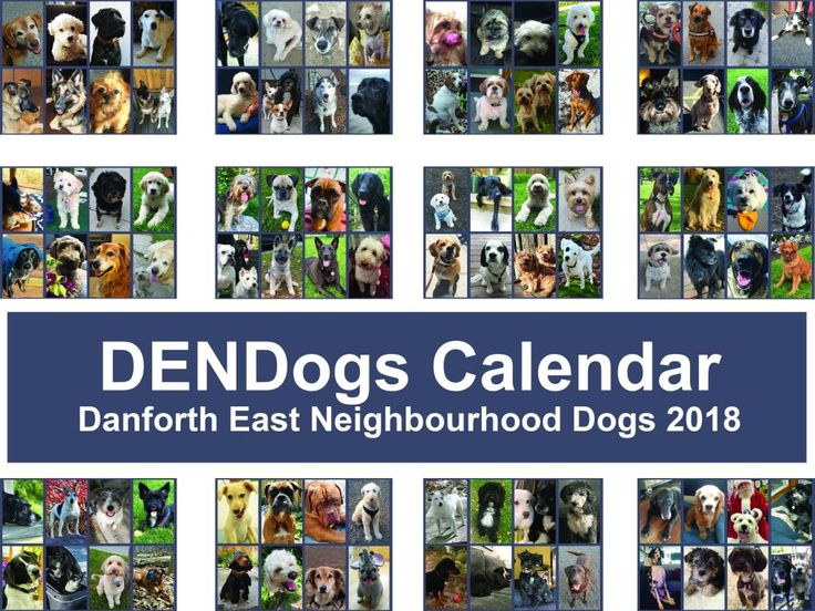 East Enders Support Animal-Related Charities with DENDogs Calendar. Click the picture to read more! #dogs #charity