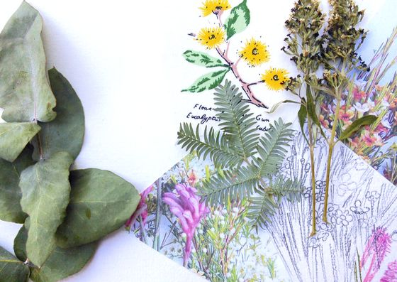 My first botanic collage sample for a children's workshop on Australia Day 2017. Creative Process Workshop.