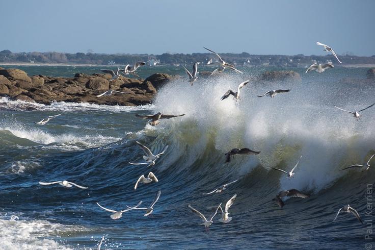#Bretagne #Finistere à la pointe de Beg Meil - #Fouesnant (4 photos) :  1) à peine le rouleau passé, ils se reposent... en attendant le suivant © Paul Kerrien  http://toilapol.net
