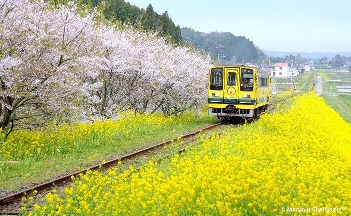菜の花色のムーミン列車が、いつまでも元気に走り続けてくれますように。。