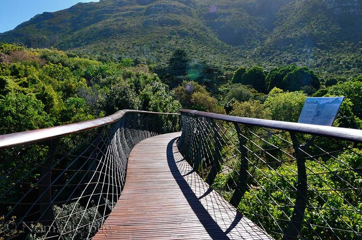 BOOMSLANG, Kirstenbosch Gardens, Cape Town, South Africa Fun Things To Do In Cape Town This Summer Nomadic Existence