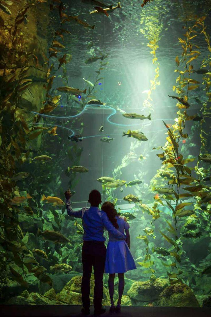 Engagement session in Ripley's Aquarium of Canada #torontoweddingphotographer #torontoengagementphotography #engagement #photography #uniqueengagement ~ http://www.focusphotography.ca/portfolio_page/toronto-ripleys-aquarium-engagement-session-ivy-and-june/