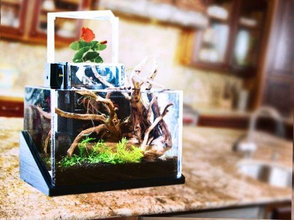 家庭でビオトープを楽しめる!米国で登場しているアクアポニックス栽培キット3選