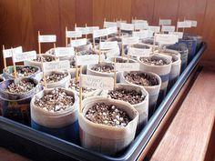 Guia para germinação de sementes