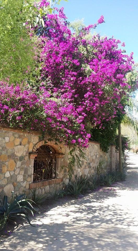 Alamos, Sonora, Mexico.