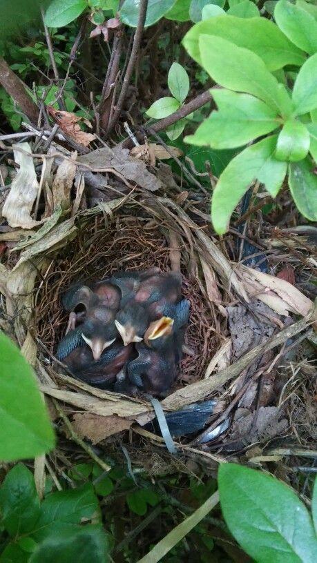 un nido de mi jardin