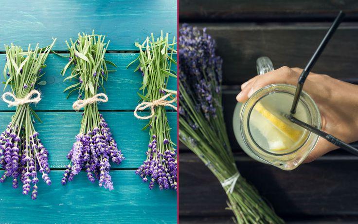 Kullanımı 3000 yıl öncesine uzanan lavanta, kullanım alanlarıyla, gerek yağı gerek çayı gerekse kurutulmuş çiçekleriyle bin bir derde şifa bir bitki.