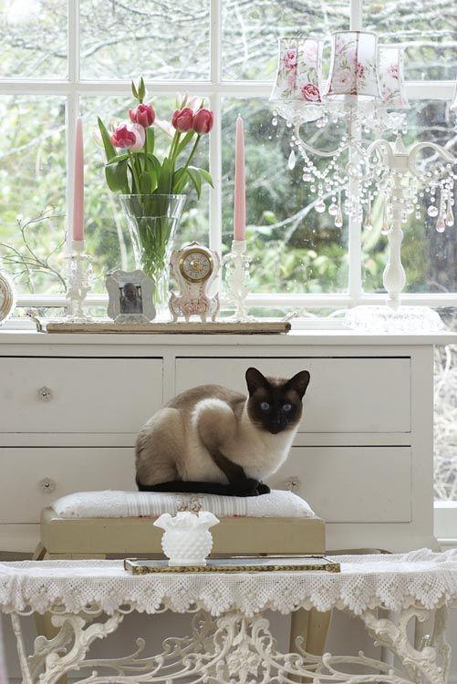 Cats rule a boudoir.