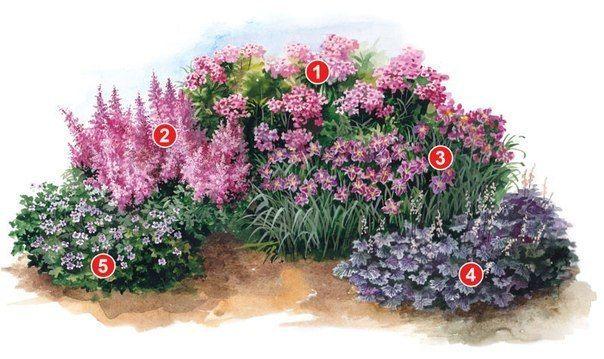 == ПРОЕКТ КЛУМБЫ ИЗ МНОГОЛЕТНИКОВ В СИРЕНЕВО-РОЗОВЫХ ТОНАХ ==  Экспликация растений:  1.Флокс  2. Астильба  3. Лилейник 4. Гейхера  5. Герань