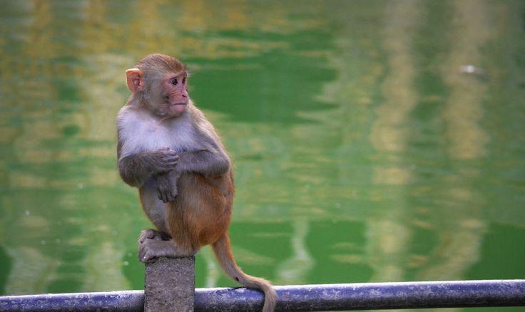 Monkeyin' Around by Dayla de Knegt - Photo 127944643 - 500px
