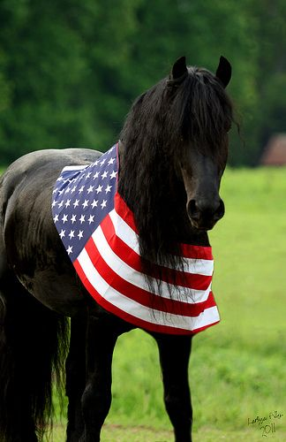 Happy 4th of July! Friesian Horse - USA flag