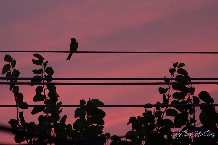 Pássaro; Por do Sol; Bird; Sunset