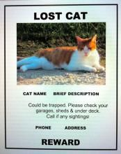 What To Do If Your Pet is Missing on Vacation   PetHub