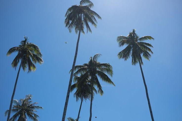 Waving Coconut trees