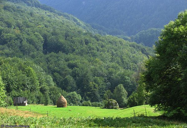 Imaginea pentru http://www.andreea-tour.ro/img_prima_localitate/7571_d_poiana_d_florilor_d_c.jpg.