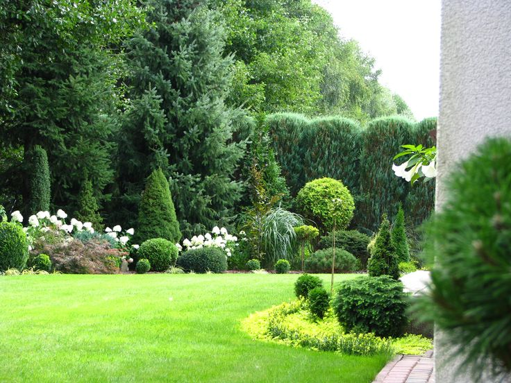 Hydrangea paniculata Limelight.