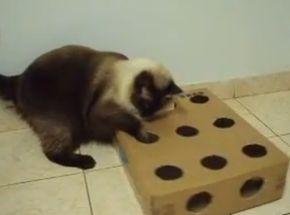 Caixa de petiscos Pegue uma caixa de sapato, faça vários furos nela e coloque um petisco dentro. Seu gatinho vai se divertir e se exercitar até conseguir a grande vitória: capturar o petisco!
