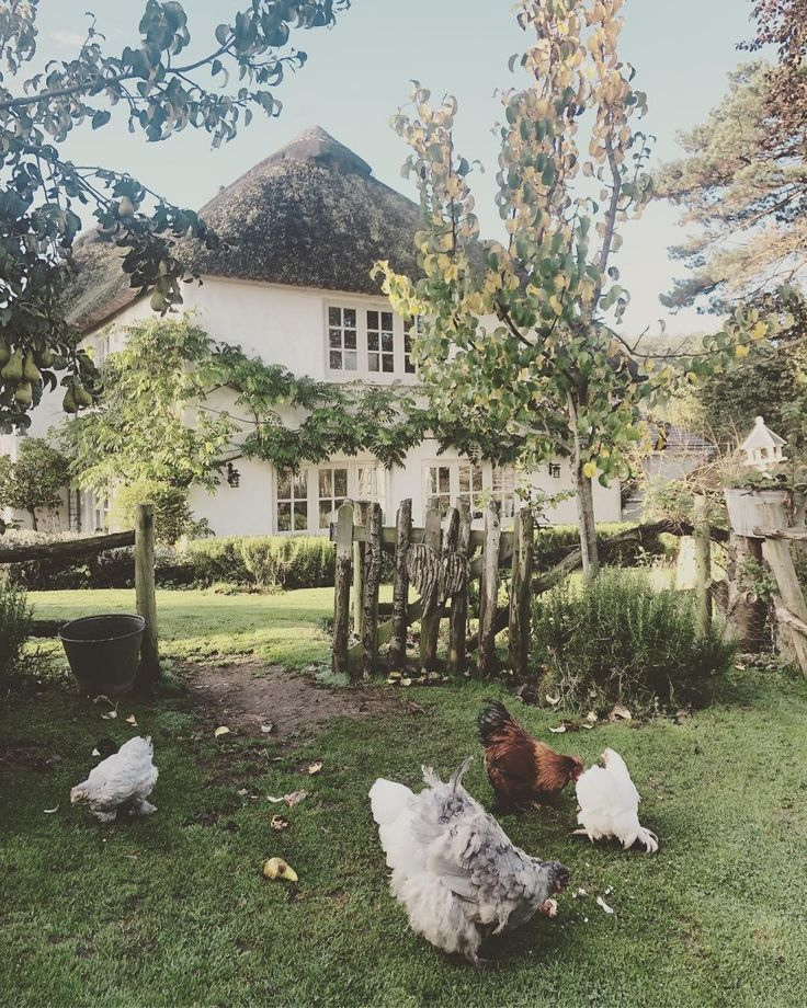Idyllic country home with picket fence and chicken…