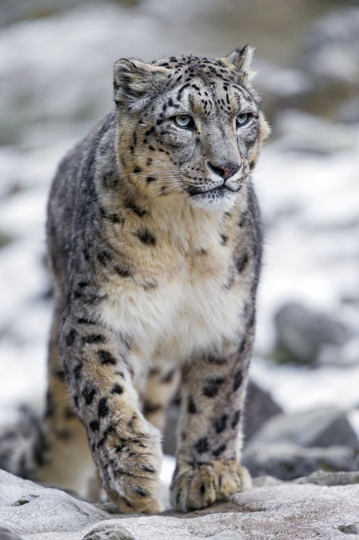 Once again, a picture of Villy walking. You can see snow in the background...