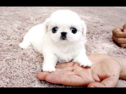 Best Of Cute Baby Animal Videos Compilation 2016 : Video Clips From The Coolest One