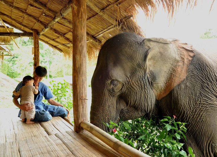 father, son and an elephant: Elephants, Gentle Giant, Little One, Friends, Dreams, Animal Photography, Pet, Thailand, Eye