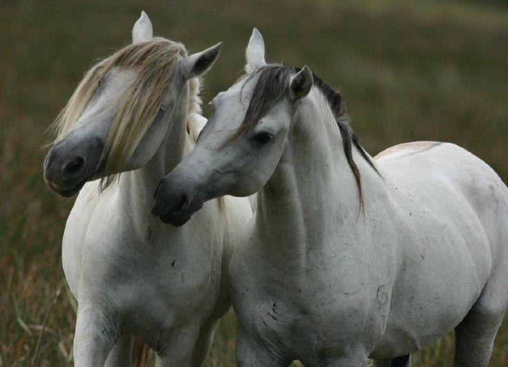 Galeria de fotos - cavalo pantaneiro