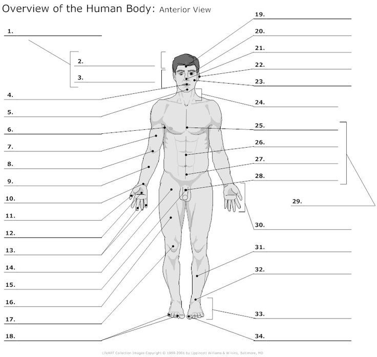 body regions diagram unlabeled