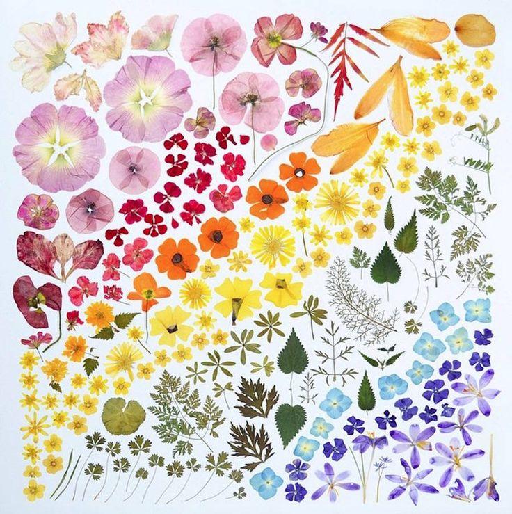 100 Days Rainbow Compositions Project – Fubiz Media