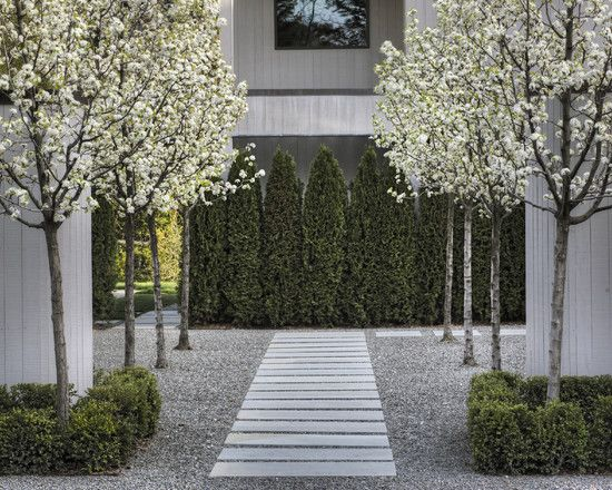 Romantic, clean, and gorgeous. Dream home courtyard. Bradford pear tree. Cleveland pear tree is similar.