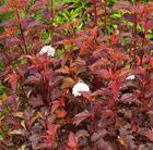 Beautifully coloured foliage