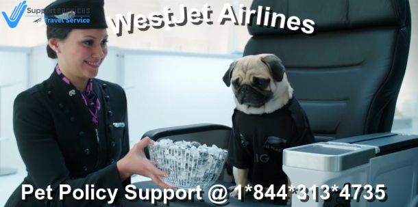To Add Your Pet To Your Flight Consult Westjet Customer Service To Address A Delegate To Know More Kindly Contact Westjet Airlin Pets Customer Service