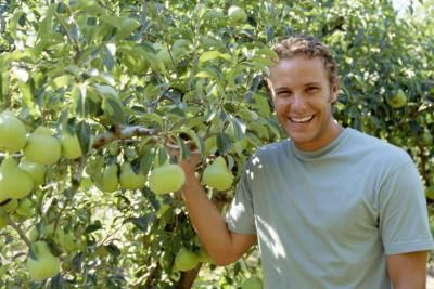 Help you? pruning asian pear trees 5440