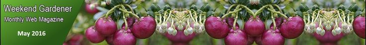 image of gardening tips header