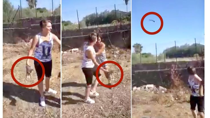 Sicily, Italy: The video of a harmless kitten being tossed high into the air is being actively shared on social media. This petit...