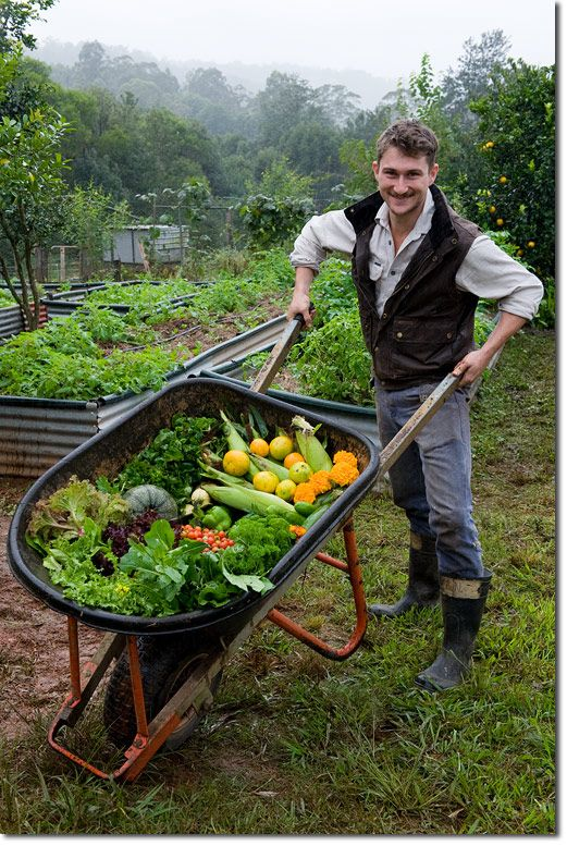 Backyard Permaculture Gardening Australia : Gardening and micro farming are only inefficient when your priority is