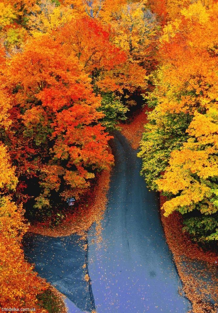 Curvy Fall Road - Woodstock, Vermont.