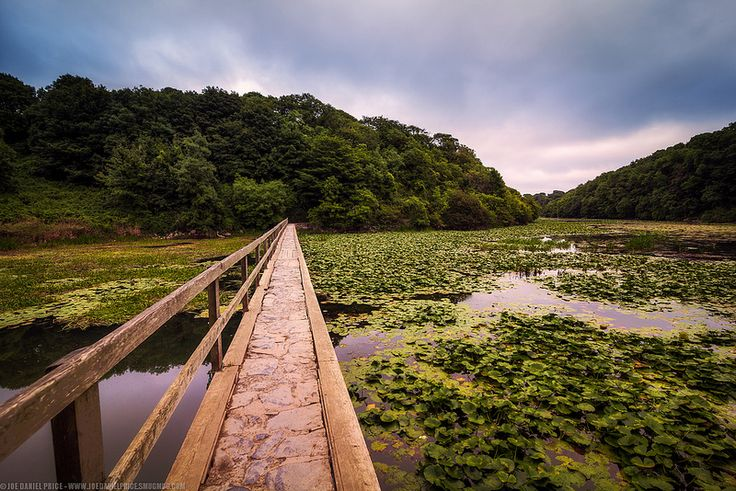 The Lilly Ponds at Bosherston, Pembrokeshire, Wales